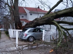 tree fell on car in driveway storm damage