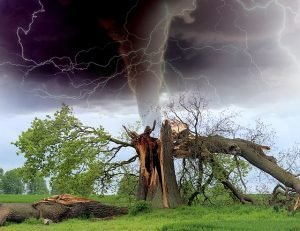 tornado hitting a tree