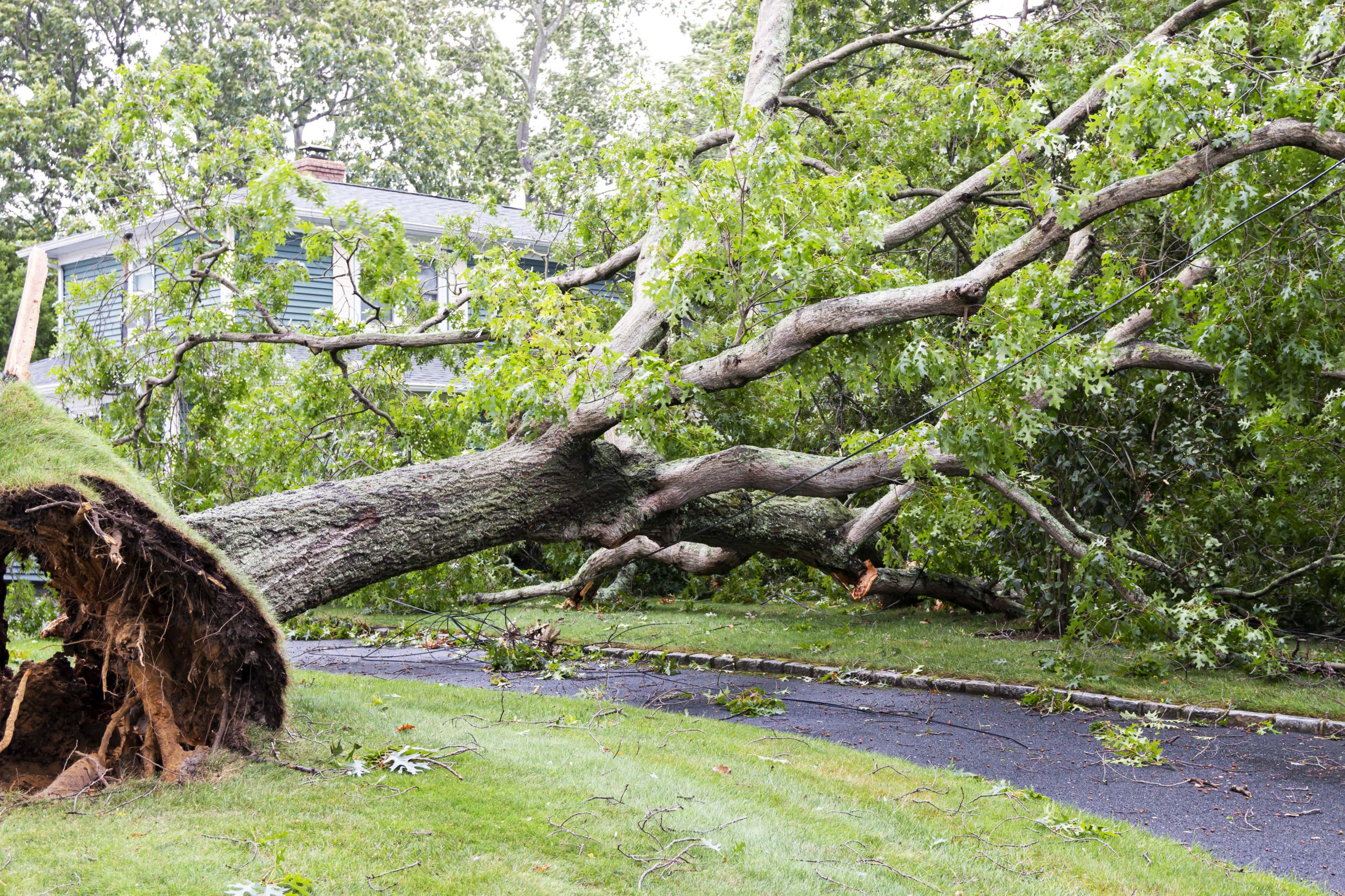 A fallen tree laying on someones driveway